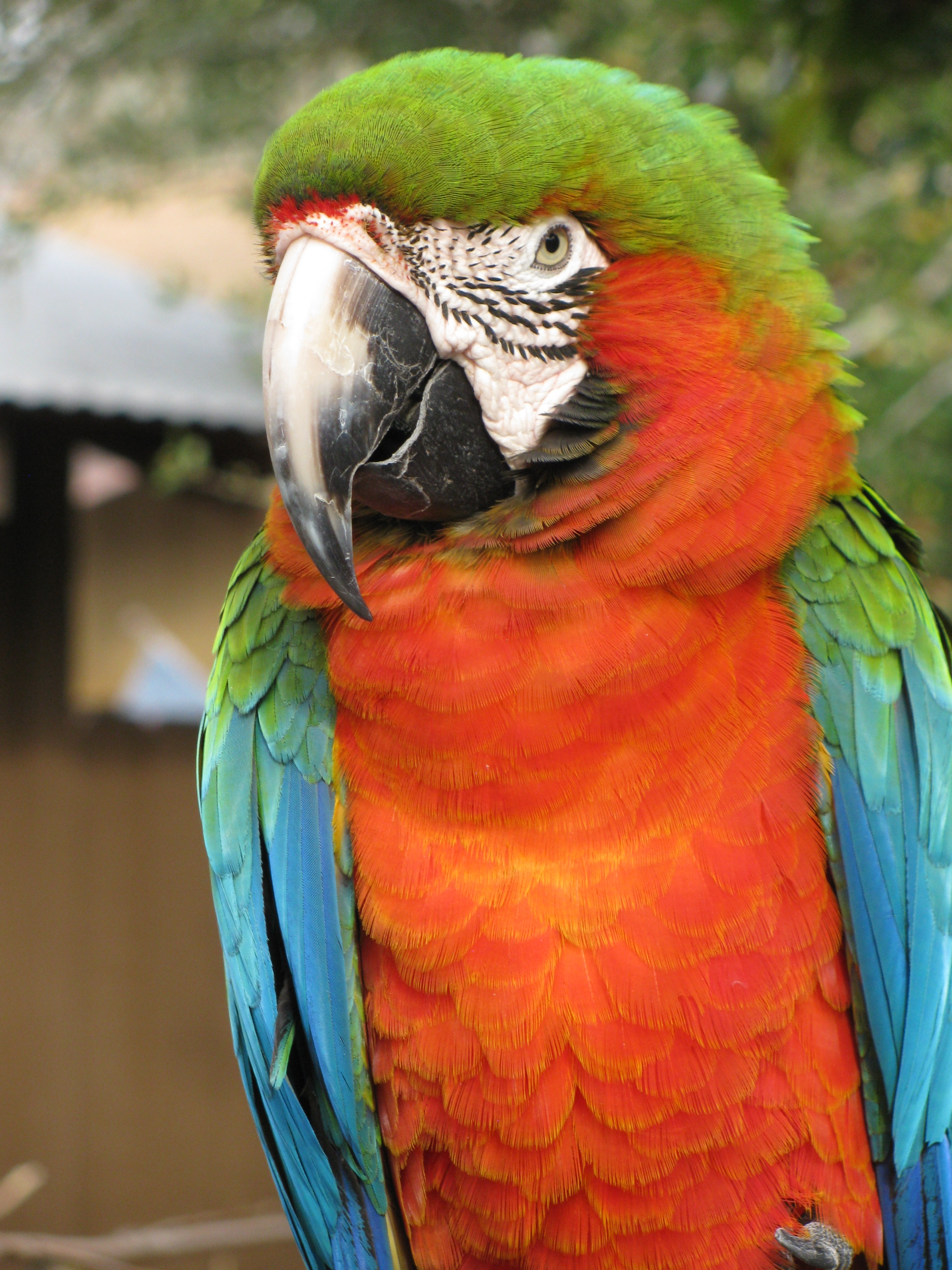 an analysis of three types of parrots