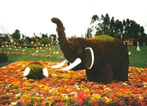 flowerelephant