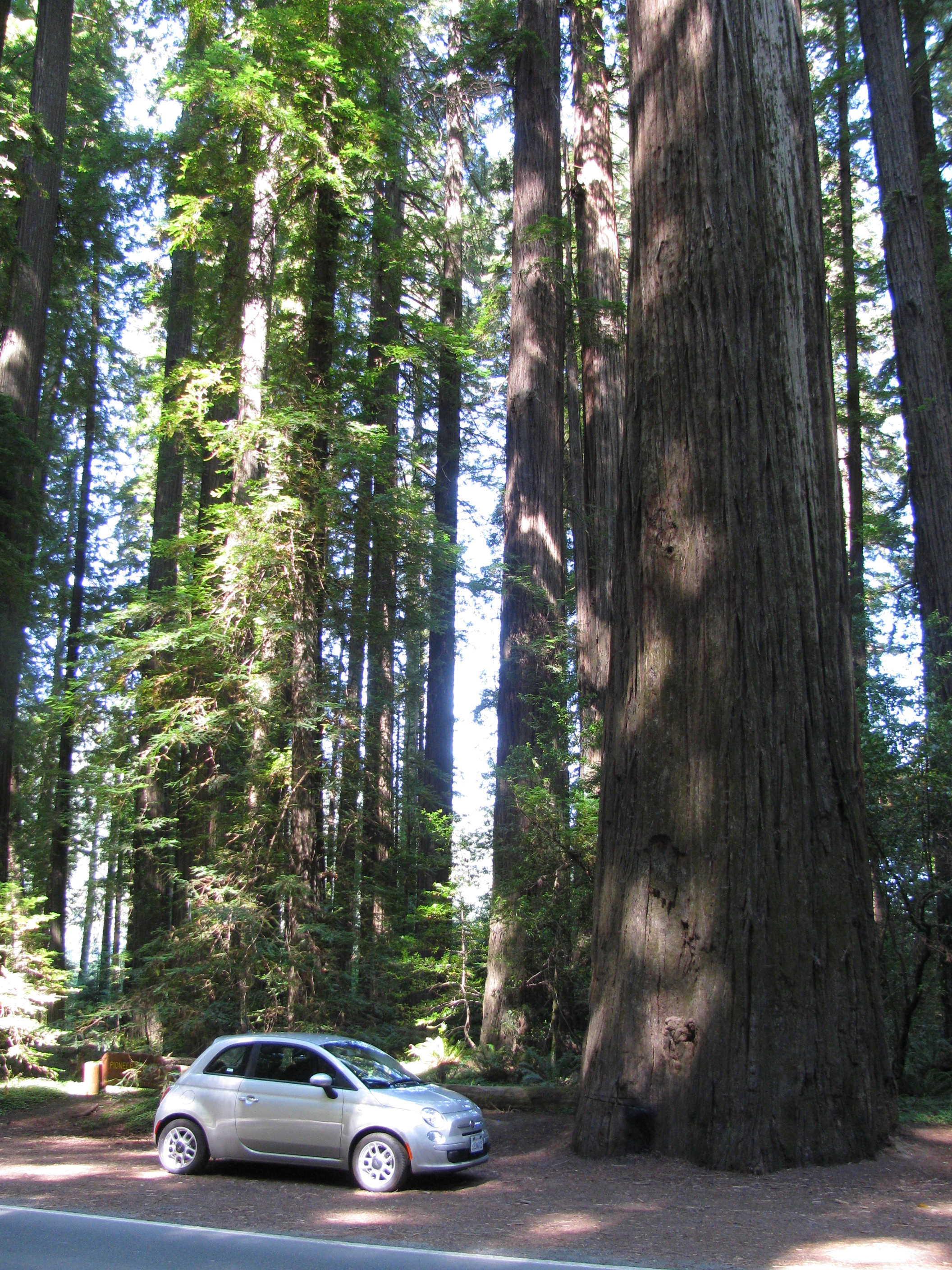 Giant Redwood Tunnel
