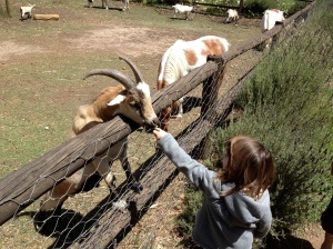The 3-year-old in our party has fun feeding one of the friendly goats