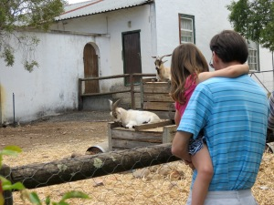 Checking out the animals at Blaauwklippen Estate
