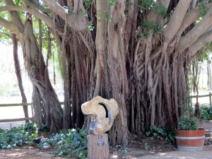 An abstract sculpture below one of the huge fig trees