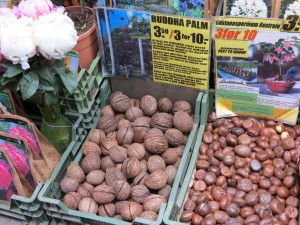 From these nuts, I'll supposedly grow a Buddha palm!