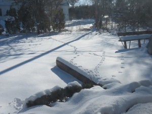 Criss-crossing squirrel tracks in the snow on our deck and lawn make an interesting pattern