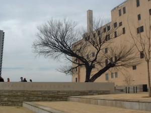 Survivor Tree in late winter