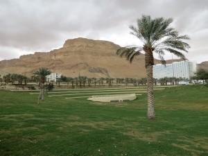 Greenery in En Boqeq