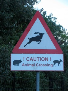 Watch out for kuku, dassies (or hyrax or rock rabbit), and small buck (deer)