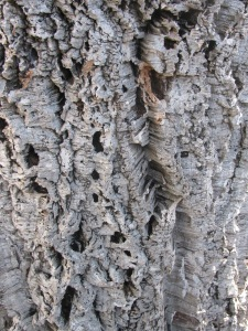 Such thick bark