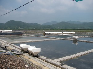 General view of Gomso Salt Field