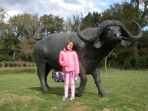 2buffalo