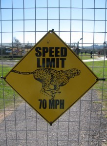 speedsign