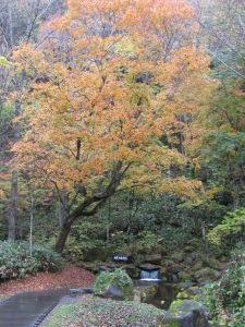autumnhokkaido
