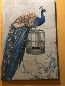 peacockpic