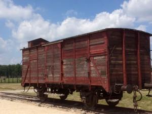 cattlecar