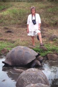 tortoiseV